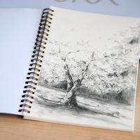 Деревья. Набросок, карандаш